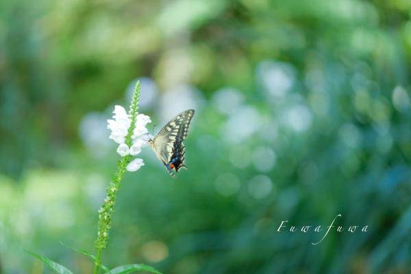 公園で遊ぶ蝶やミツバチ **_d0344864_21304599.jpg