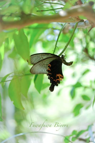 公園で遊ぶ蝶やミツバチ **_d0344864_21362303.jpg