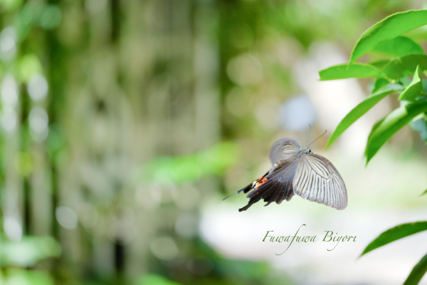 公園で遊ぶ蝶やミツバチ **_d0344864_22323515.jpg