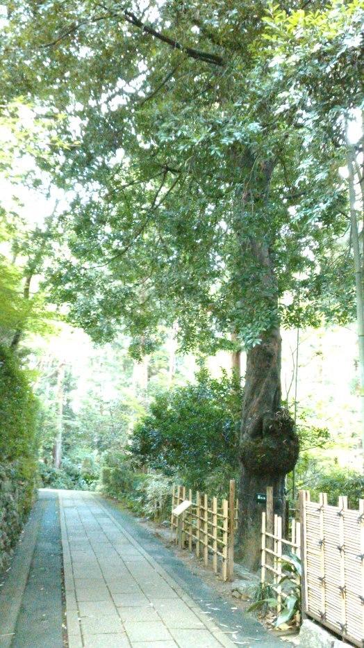 気賀を訪ねて 浜松市 龍潭寺(りょうたんじ) _c0157866_16125231.jpg