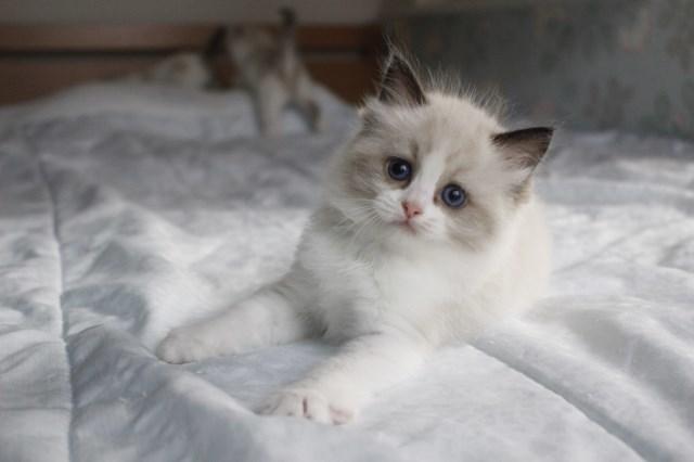 今日の仔猫達 オモチャで遊ぼう~_a0285571_23103874.jpg