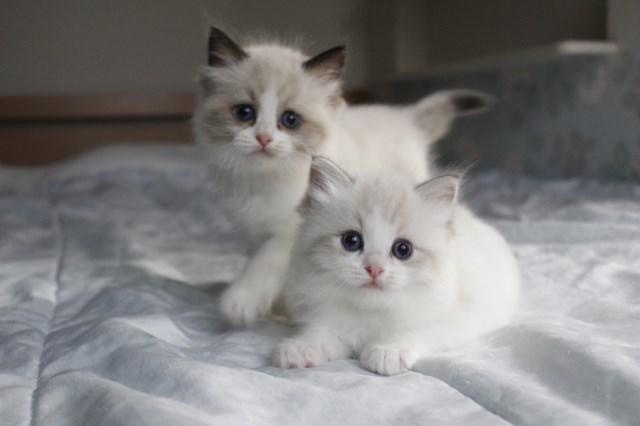 今日の仔猫達 オモチャで遊ぼう~_a0285571_23104489.jpg