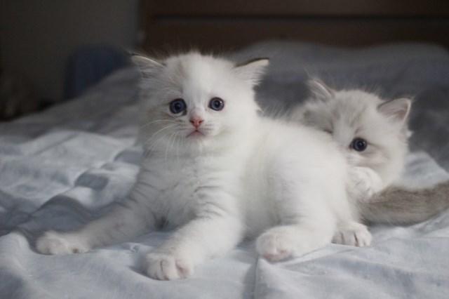 今日の仔猫達 オモチャで遊ぼう~_a0285571_23104918.jpg