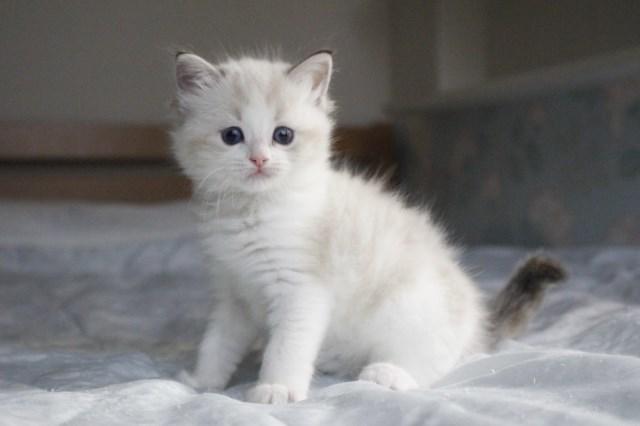 今日の仔猫達 オモチャで遊ぼう~_a0285571_23110038.jpg