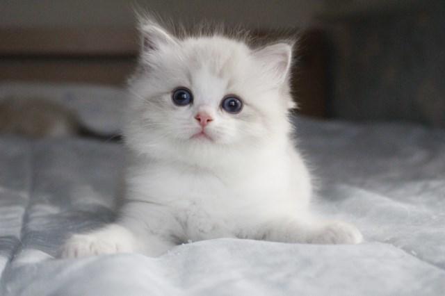 今日の仔猫達 オモチャで遊ぼう~_a0285571_23110590.jpg