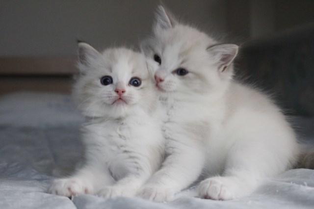 今日の仔猫達 オモチャで遊ぼう~_a0285571_23112305.jpg