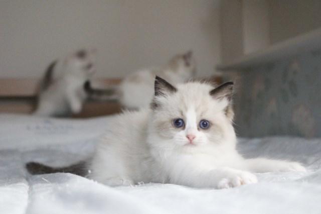 今日の仔猫達 オモチャで遊ぼう~_a0285571_23112991.jpg