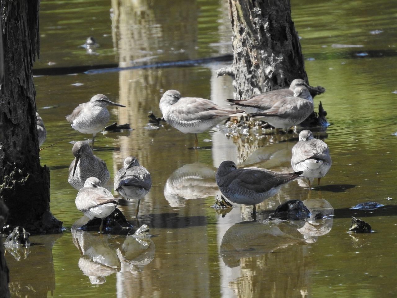 ★ナイトウォッチングはじまりました・・・先週末の鳥類園(2018.8.18~19)_e0046474_00281092.jpg