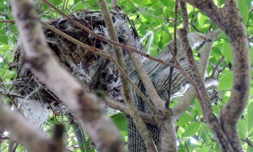 ヘビ -たぶん「ジムグリ」と「シマヘビ」-_b0029488_17550576.jpg