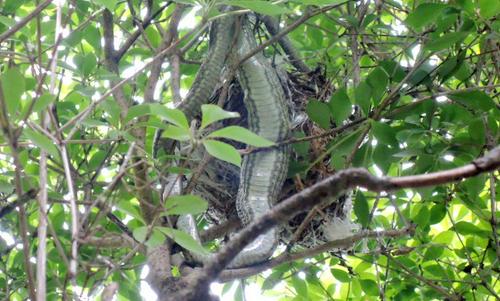 ヘビ -たぶん「ジムグリ」と「シマヘビ」-_b0029488_17551211.jpg
