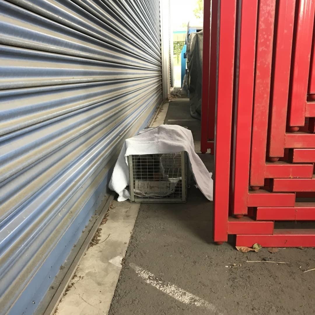 企業の敷地内でTNRと子猫保護_b0235714_14430627.jpg