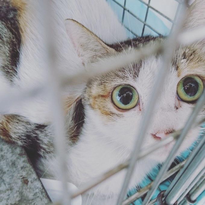 企業の敷地内でTNRと子猫保護_b0235714_14440789.jpg