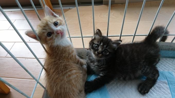 企業の敷地内でTNRと子猫保護_b0235714_14461441.jpg