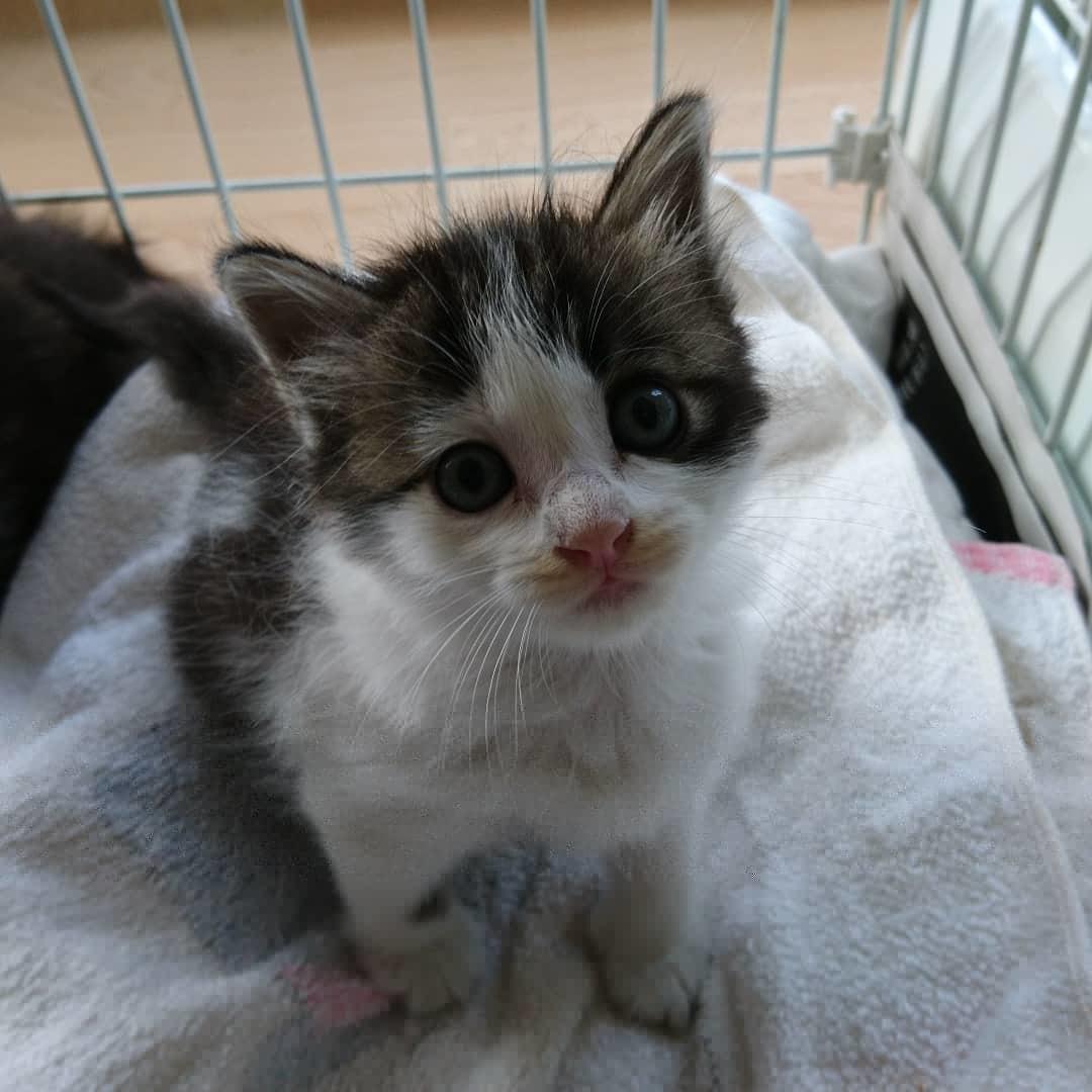 企業の敷地内でTNRと子猫保護_b0235714_14464050.jpg