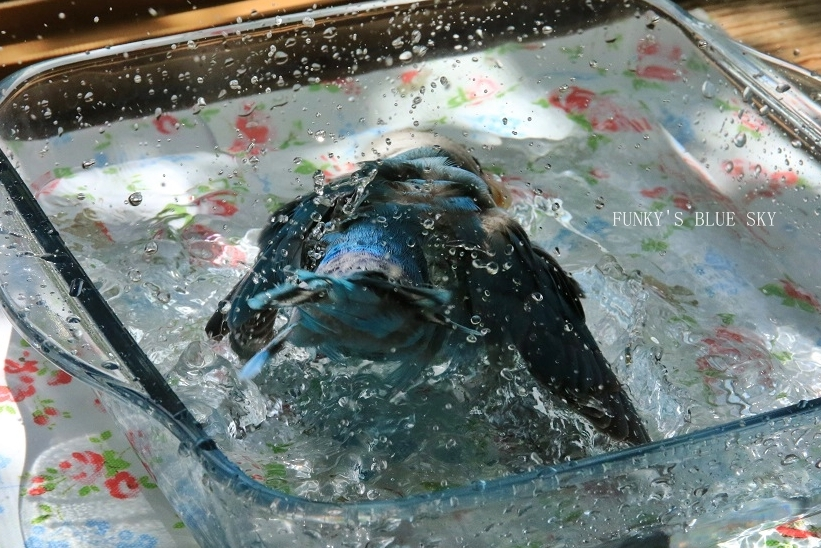 水浴びB.Bの記録 → (8月19日)_c0145250_09225852.jpg