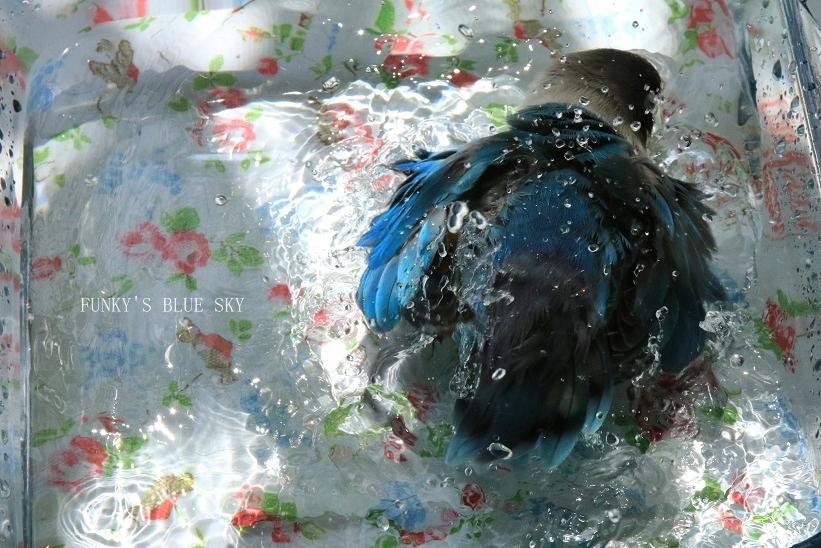 水浴びB.Bの記録 → (8月19日)_c0145250_09231134.jpg