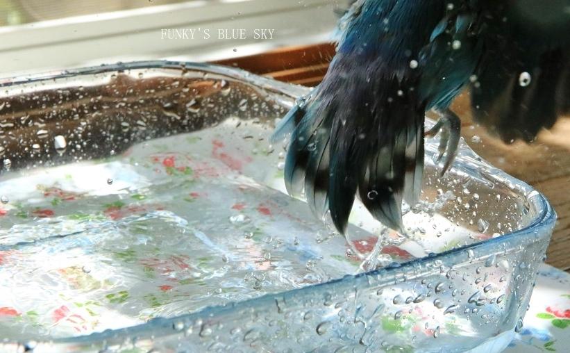 水浴びB.Bの記録 → (8月19日)_c0145250_09232478.jpg