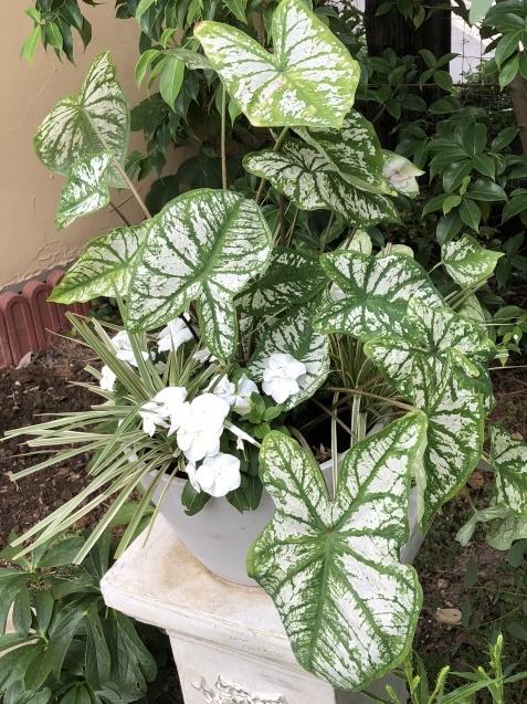ガーデンリビングの様子「寄せ植えと百日紅」_a0243064_09381071.jpg