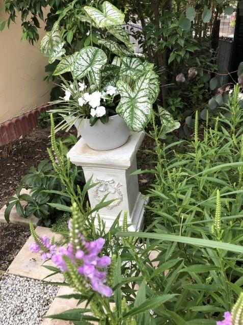 ガーデンリビングの様子「寄せ植えと百日紅」_a0243064_09391651.jpg