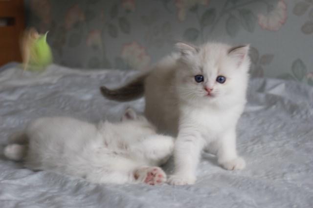 今日の仔猫達  激しさが違う_a0285571_22530083.jpg