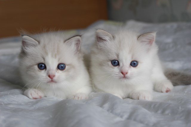 今日の仔猫達  激しさが違う_a0285571_22531147.jpg