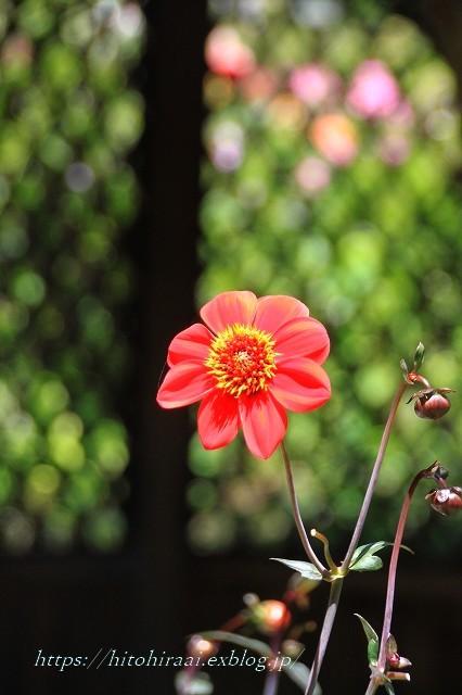 BARAKURA ENGLISH GARDEN ②庭園の花々_f0374092_20050714.jpg