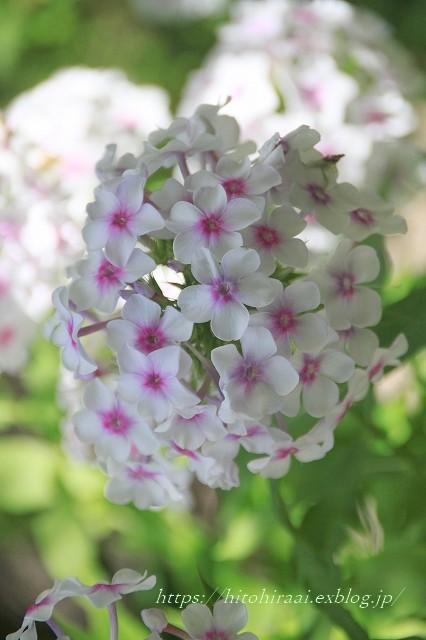 BARAKURA ENGLISH GARDEN ②庭園の花々_f0374092_20062065.jpg