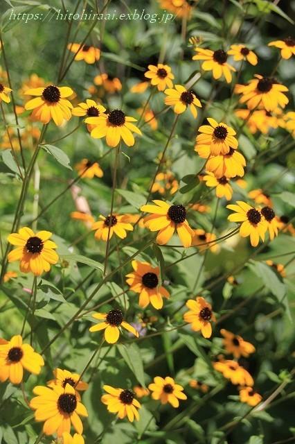 BARAKURA ENGLISH GARDEN ②庭園の花々_f0374092_20064045.jpg