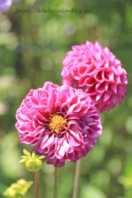 BARAKURA ENGLISH GARDEN ②庭園の花々_f0374092_20143058.jpg