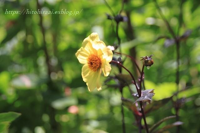 BARAKURA ENGLISH GARDEN ②庭園の花々_f0374092_20513353.jpg