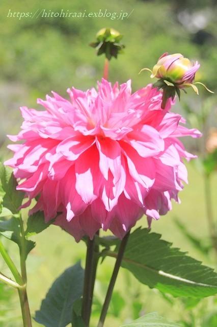 BARAKURA ENGLISH GARDEN ②庭園の花々_f0374092_20521129.jpg