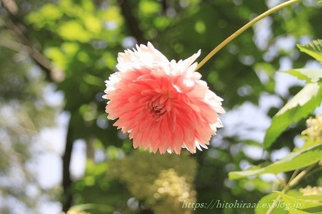 BARAKURA ENGLISH GARDEN ②庭園の花々_f0374092_20522833.jpg