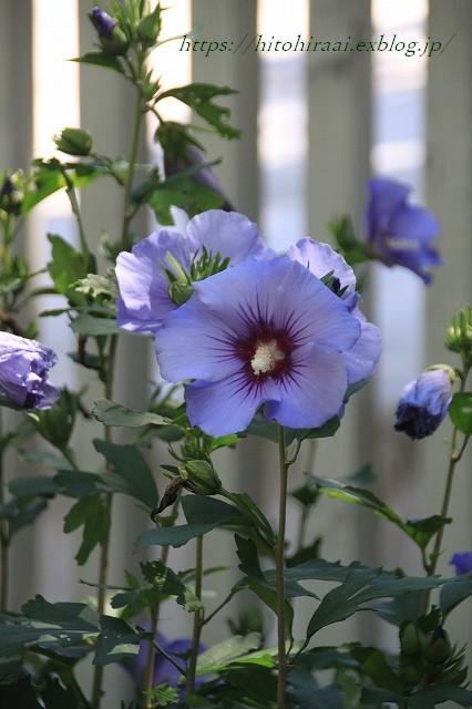 BARAKURA ENGLISH GARDEN ②庭園の花々_f0374092_20550806.jpg