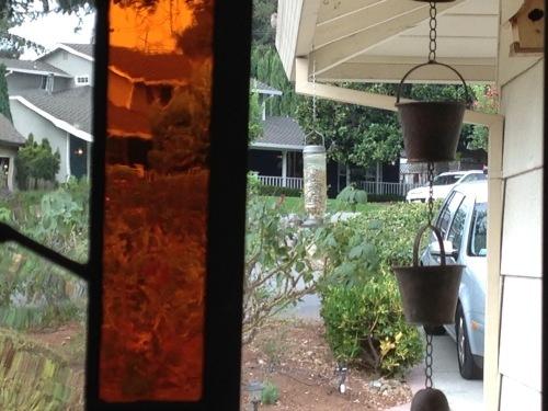 庭に来る鳥_a0331910_13210827.jpeg