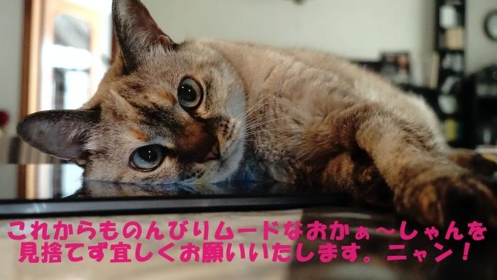 ちょこ家の日々☆ブログ開設5周年~♫_b0290816_00495499.jpg