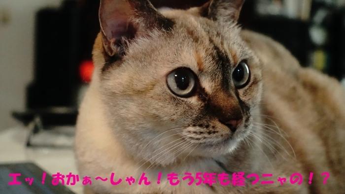 ちょこ家の日々☆ブログ開設5周年~♫_b0290816_00502053.jpg
