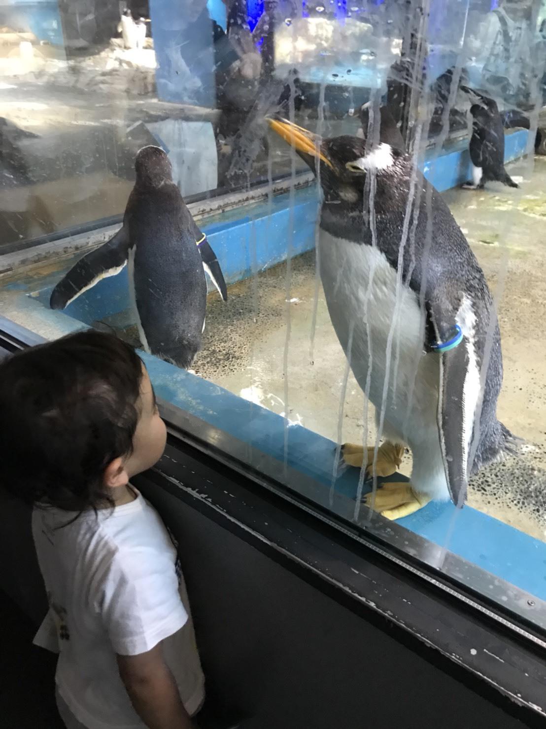 ペンギン水族館に行ってきました♪_e0184224_08194876.jpg