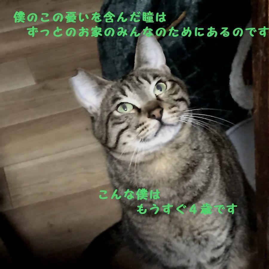 d0393041_10041246.jpg