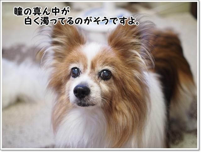 d0013149_23225161.jpg