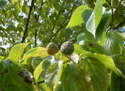 当たり前ですが、毎年同じように季節は移ろい、もうすぐ秋です_b0102572_1732239.jpg