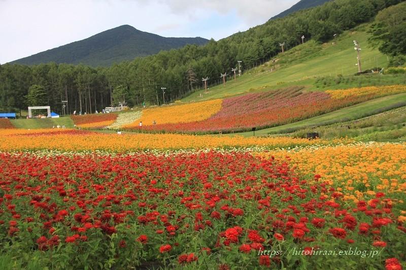 富士見高原リゾート花の里 ②お花畑エリアと萌黄の村_f0374092_23514912.jpg