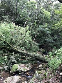 台風20号の爪痕_e0103024_13461802.jpg
