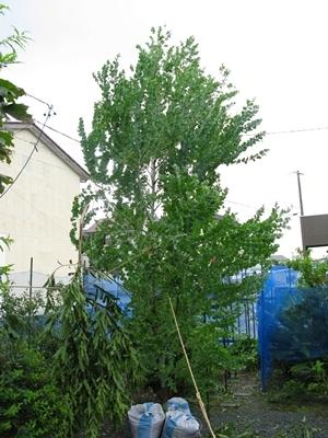 また台風20号_f0129726_18471437.jpg