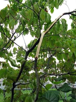 また台風20号_f0129726_18593760.jpg