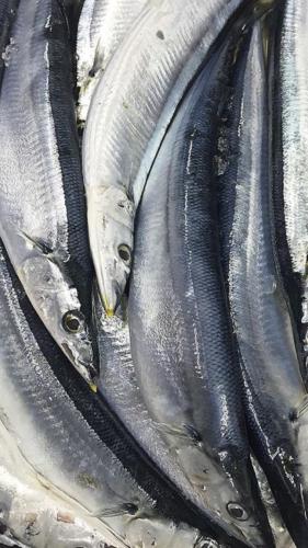 秋刀魚、入荷!!_c0119937_02325508.jpg