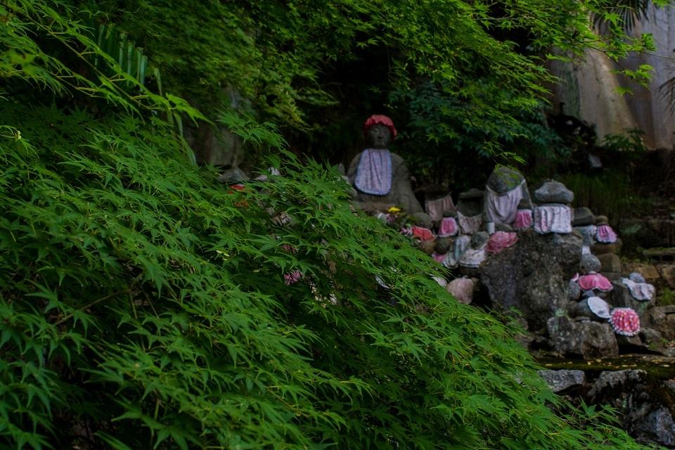 醒ヶ井宿 地蔵川に咲く梅花藻_e0363038_14183018.jpg