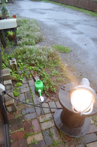 大雨台風の中も_b0207642_17264421.jpg