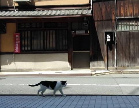 フランスのお城の猫ちゃん・西陣まいづるにも・鶴のお店にも_f0181251_18473091.jpg