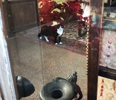 フランスのお城の猫ちゃん・西陣まいづるにも・鶴のお店にも_f0181251_1954735.jpg