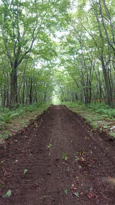 新たなる道&桂、林間コース整備_e0183255_03173768.jpg